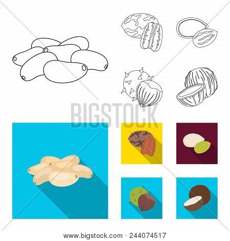 Pecan, Pine Nut, Pumpkin Seeds, Chestnut.different Kinds Of Nuts Set Collection Icons In Outline, Fl
