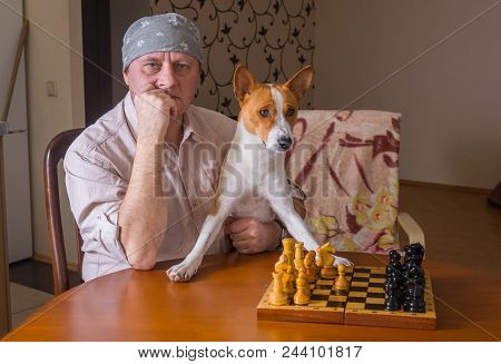 Portrait Of Mature Man With Basenji Dog Sitting At The Table And Waiting For  Rival In A Chess Famil