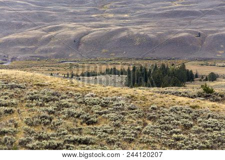 Hills Of Wyoming, Sagebrush, Trees In Valley
