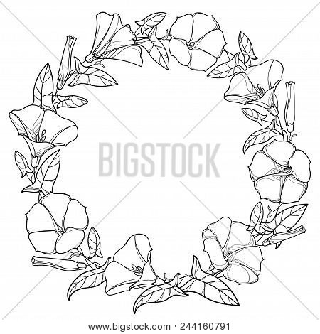 Vector Round Wreath With Outline Convolvulus Or Bindweed Bell, Leaf And Bud In Black Isolated On Whi