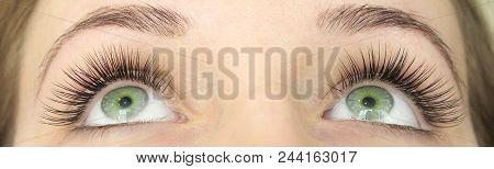 Close Up View Of Beautiful Green Female Eyes With Long False Eyelashes. Eyelash Extension Procedure.