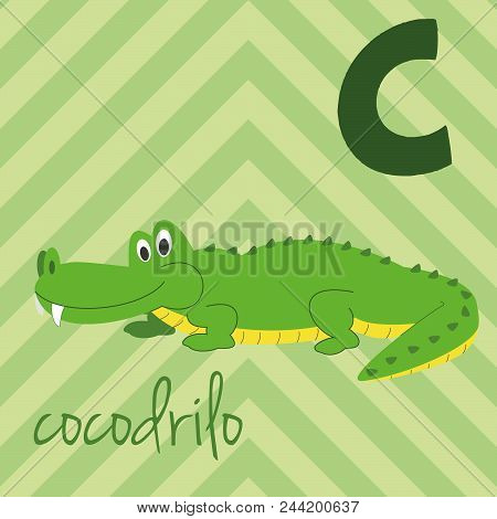 Cute Cartoon Zoo Illustrated Alphabet With Funny Animals. Spanish Alphabet: C For Cocodrilo. Learn T