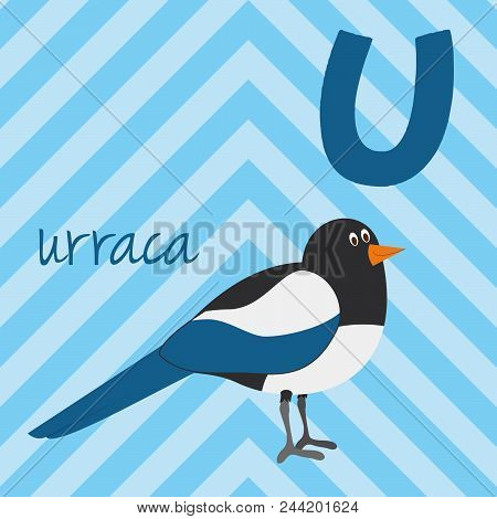 Cute Cartoon Zoo Illustrated Alphabet With Funny Animals. Spanish Alphabet: U For Urraca. Learn To R