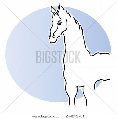 White Horse.  Illustration Of Standing Beautiful White Horse With Blue Background.