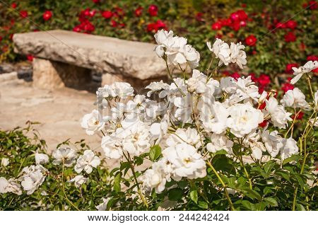An Abstract Image Of A Bench In A Cemetery Surrounded By Beautiful Flowers, A Concept For Life And D