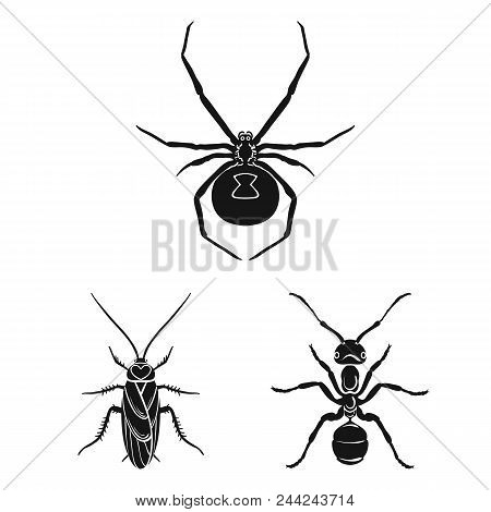 Different Kinds Of Insects Black Icons In Set Collection For Design. Insect Arthropod Vector Symbol
