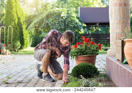 Gardener Removing Weed From Garden. Man Taking Care About Lawn And Backyard