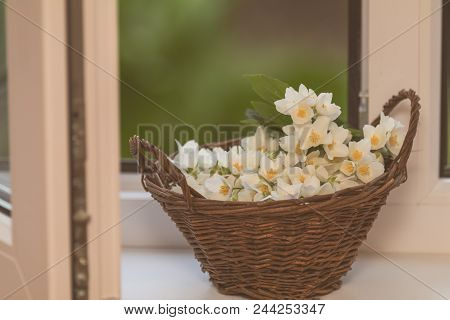 Cozy Spring Summer Home Concept. Jasmine Flowers Blooming In Wicker Basket On Windowsill. Toned And