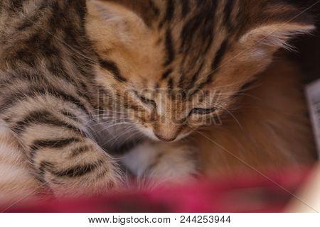 Cute Beautiful Kitten Sleeping In A Basket.