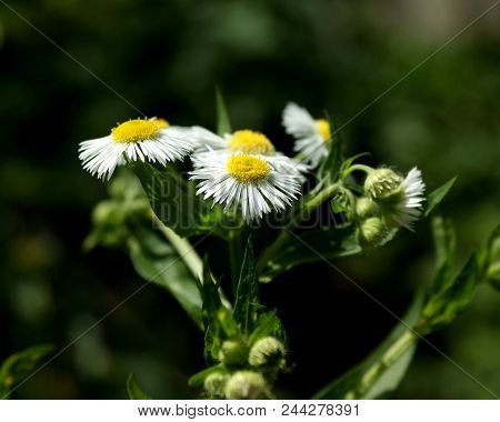 Summer. Wealth Of Colors And Shapes. Small Numerous White Flowers Attract Attention.