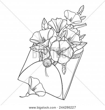 Vector Bouquet With Outline Convolvulus Or Bindweed, Ornate Leaf And Bud In Open Craft Envelope In B