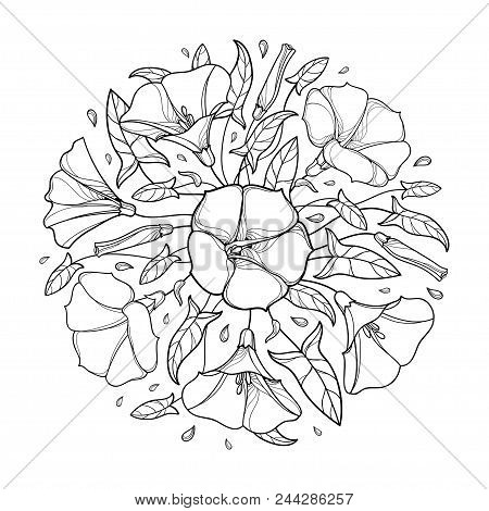 Vector Round Bouquet With Outline Convolvulus Or Bindweed Bell, Ornate Leaf And Bud In Black Isolate