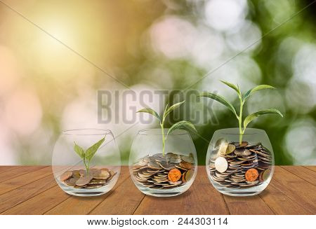Saving Money Concept. Coins In Glass Jar. Investment Money Concept. Growing Money, Finance And Inves