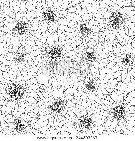 Hand Drawn Pattern Of Sunflowers Background Flower Sunflower Black White Packaging Oil Products