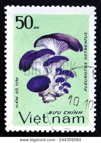 Moscow, Russia - February 12, 2017: A Stamp Printed In Vietnam Shows Pleurotus Ostreatus, Series, Ci