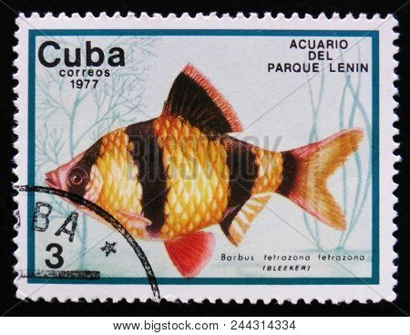 Moscow, Russia - April 2, 2017: A Post Stamp Printed In Cuba Show The Fish With The Inscription Barb