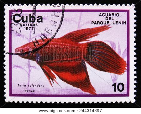 Moscow, Russia - April 2, 2017: A Post Stamp Printed In Cuba Show The Fish With The Inscription Bett