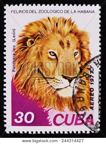 Moscow, Russia - April 2, 2017: A Post Stamp Printed In Cuba, Shows Panthera Leo, Series, Circa 1977