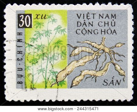 Moscow, Russia - April 2, 2017: A Post Stamp Printed In Vietnam Shows Ginseng Roots, Circa 1956