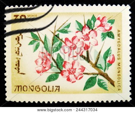Moscow, Russia - April 2, 2017: A Post Stamp Printed In Mongolia Shows Blooming Almond Flower (amygd