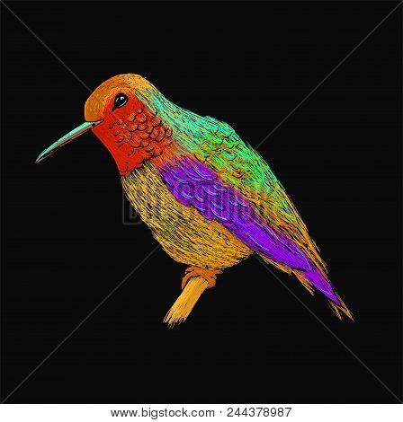 Hummingbird With Colorful Glossy Plumage. Modern Pop Art Style. Colorful Bird, Black Background. Vec
