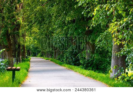 Path Below The Linden Trees. Lovely Summer Scenery Of The Longest Linden Alley In Europe