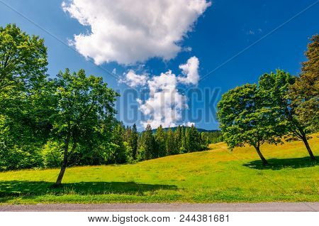 Trees On The Grassy Meadow By The Road In Summer. Beautiful Landscape With Spruce Forest And Mountai