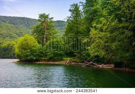 Beech Forest On The Shore Of Mountain Lake. Beautiful Summer Landscape. Clean Environment Concept.