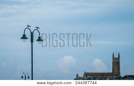 Seagulls Sitting On A Street Lamp With St Marys Church In The Background, Penzance, Cornwall, Englan