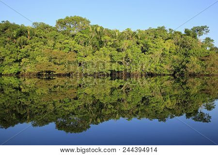The Amazon Rainforest With Blue Sky And Mirror Reflections In The Water. Amazonas, Brazil