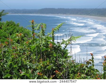 Various Foliage, Blossoms And Conifers Overlooking Hazy Northern California Surf And Beach