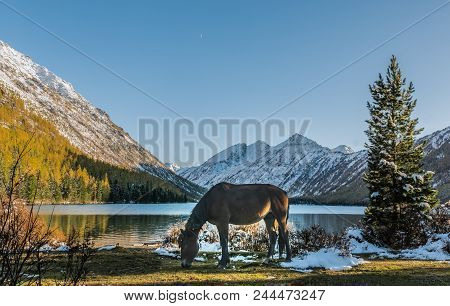 The Landscape Of Beautiful Mountain Lake With The Horse In The Altai Mountains On Background, In Aut