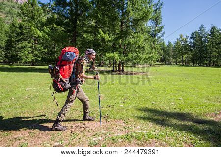 Full Length Portrait Of A Man Backpacker With A Backpack Hiking In Beautiful Fir Forest. Summer Leis