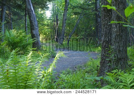Path In The Forest Woodland Nature Trail Hiking Environment Outdoor