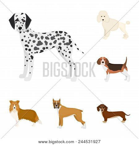 Dog Breeds Cartoon Icons In Set Collection For Design.dog Pet Vector Symbol Stock  Illustration.
