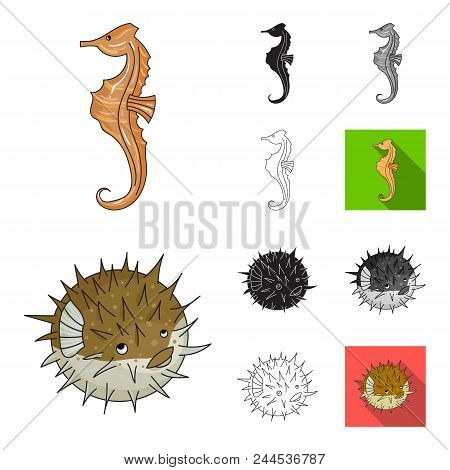 A Variety Of Marine Animals Cartoon, Black, Flat, Monochrome, Outline Icons In Set Collection For De