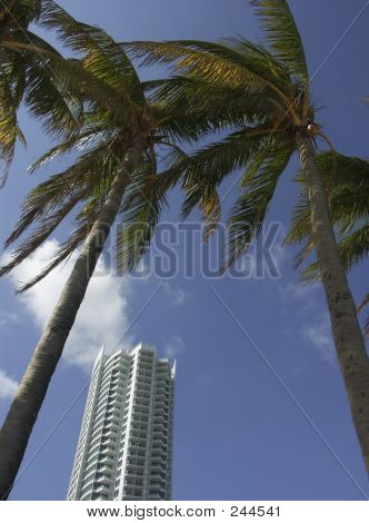 Modern Tower And Palm Trees