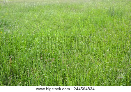 Green Grass Photo Background Or Texture. Close-up Image Of Fresh Long Spring Green Grass. Beautiful
