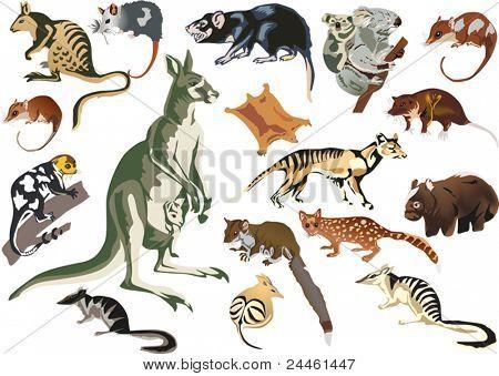 illustration with set of marsupial animals isolated on white background
