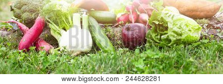 Panorama With Lot Of Various Organic Vegetables Is Lying In A Flower Meadow, Enough Copyspace