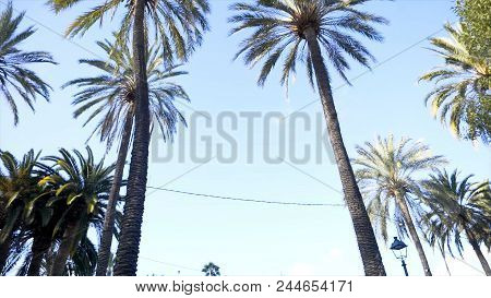 Palm Trees And Sky. Palm Trees In The City Park. Palm Tree At Summer Day. Summer Travel Concept Back