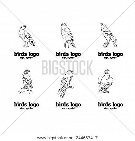 Birds Prey Set Bird Vector Photo Free Trial Bigstock
