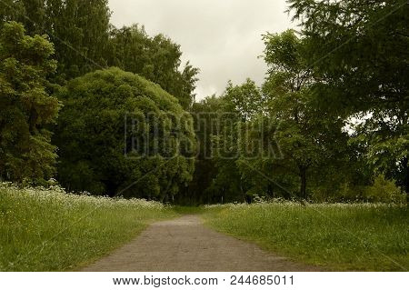 Calm Quiet Place In The Forest. Ideas For A Relaxing Summer. Health And Relaxation In The Open Air