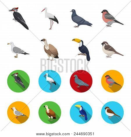 Gull, Toucan And Other Species. Birds Set Collection Icons In Cartoon, Flat Style Vector Symbol Stoc