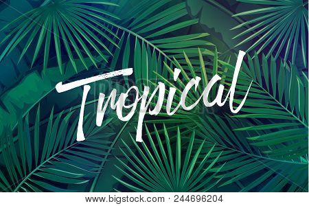 Vector Tropical Vector Photo Free Trial Bigstock