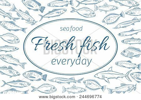 Vector Poster Hand Drawn Fish. Page Design Seafood With Bream, Mackerel, Tunny Or Sterlet, Codfish A