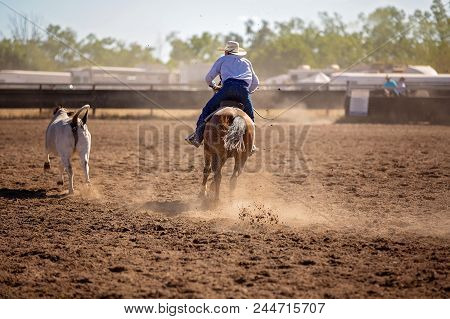 Cowboy Competing In A Campdraf Event At A Country Rodeo. Campdrafting Is A Unique Australian Sport I