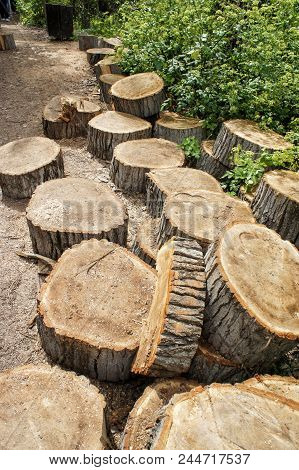 The Trunk Of A Tree Is Sawn To Pieces, Stumps Of Felled Trees, Pile Of Wooden Tree Stumps, Sawn Tree