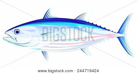 Skipjack Tuna Fish In Side View, Realistic Sea Fish Illustration On White Background