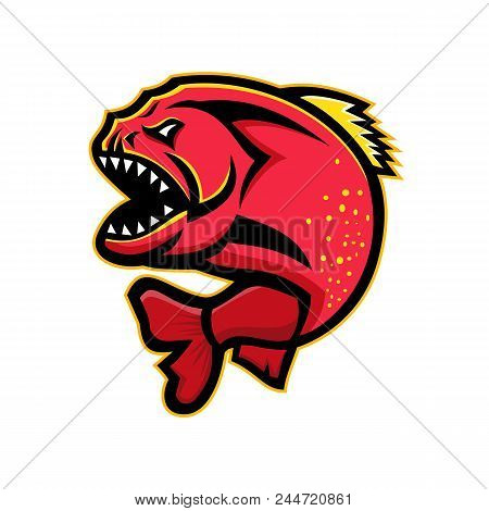 Mascot Icon Illustration Of An Angry Piranha, Pirana Or Caribe, A Member Of Family Characidae In Ord